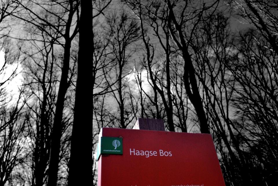 Haagse Bos